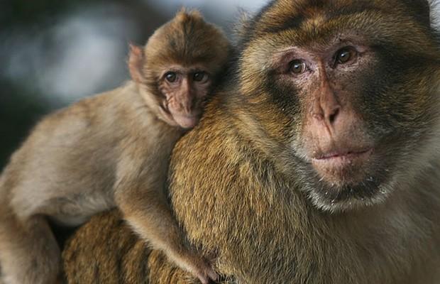 جدري القردة