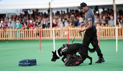 الشرطة السينوتقنية: تناغم تام بين عناصر الشرطة المدربين والكلاب البوليسية المدربة