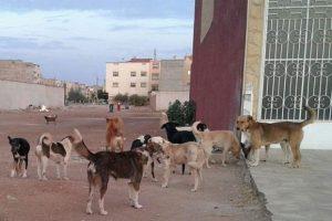 انتشار الكلاب