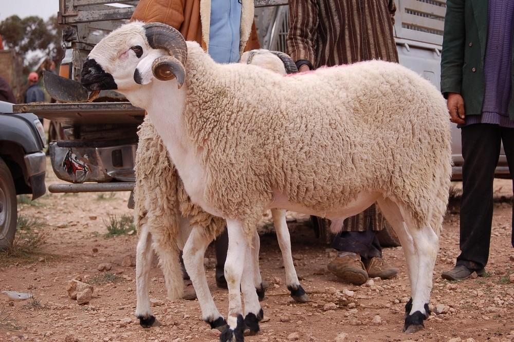 حزب مغربي