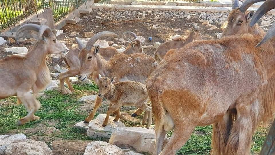 حديقة الحيونات باكادير