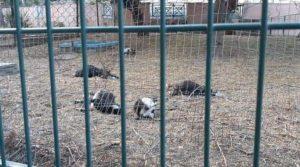 حديقة الطيور بأكادير
