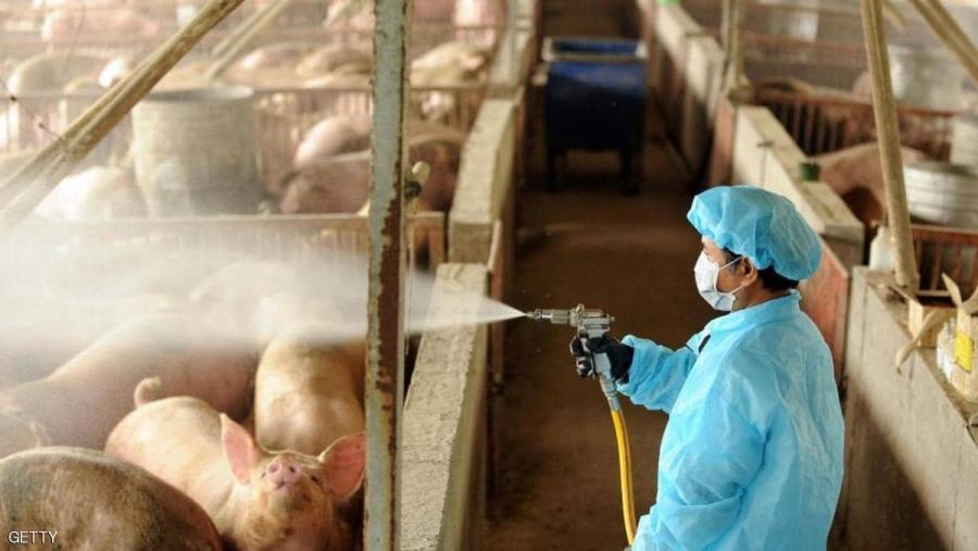 فيروس إنفلونزا الخنازير الجديد ووضع كوفيد-19