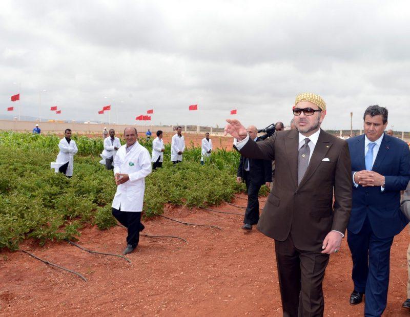غابات المغرب 2020-2030 .. استراتيجية تكرس الرؤية الملكية لتنمية مستدامة