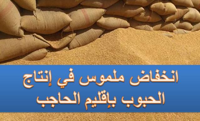 إنتاج الحبوب بإقليم الحاجب.. انخفاض إلى النّصف
