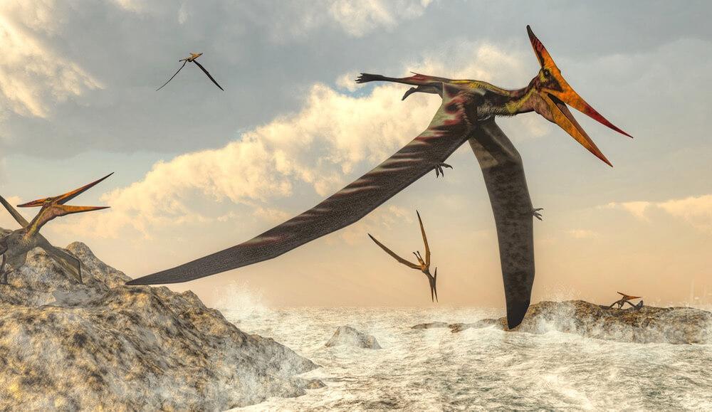 اكتشاف تيروصورات بحجم الديك الرومي في المغرب