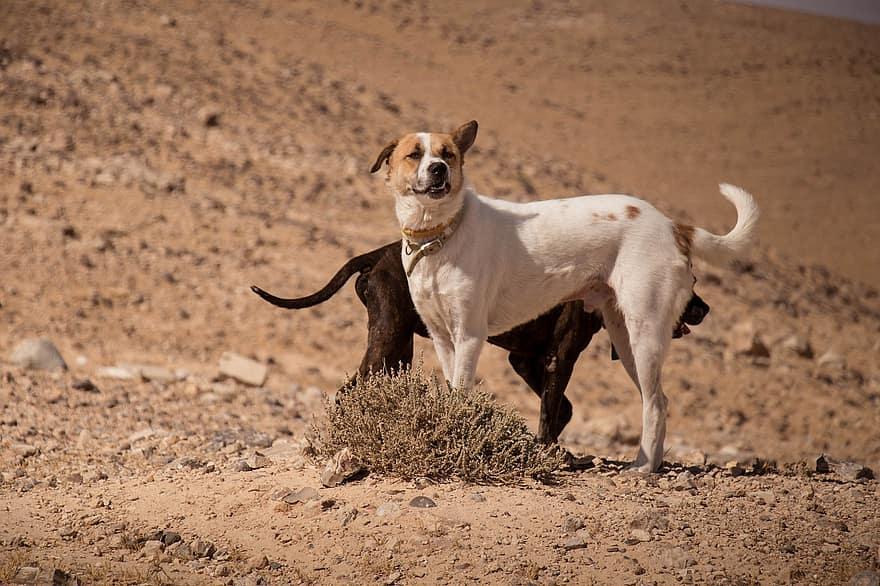 بعد إسقاط طائرة درون الجيش المغربي يستهدف كلبا مزودا بكاميرة تجسس بالمنطقة العازلة