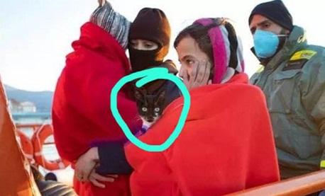 عائلة ريفية تقرر الهجرة بأكملها ومعهم قطهم ..!!