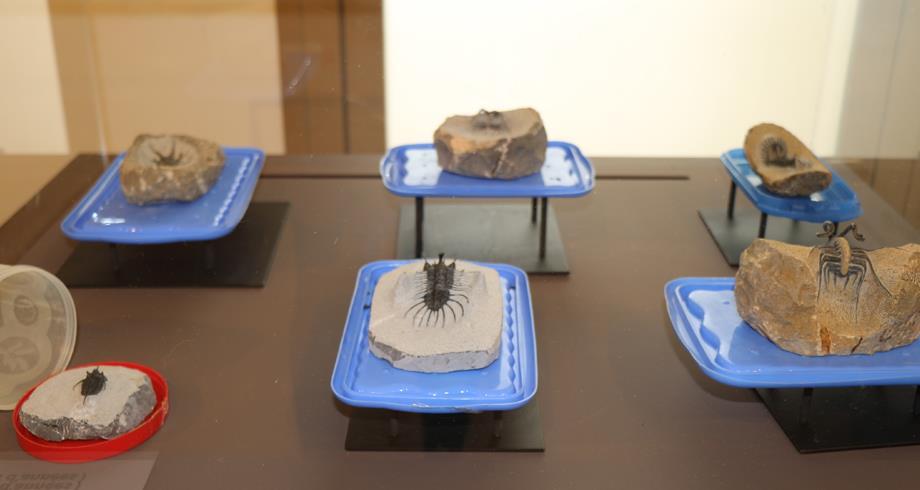أزيد من 25 ألف قطعة أثرية أعيدت للمغرب ستكون متاحة للطلبة والعموم