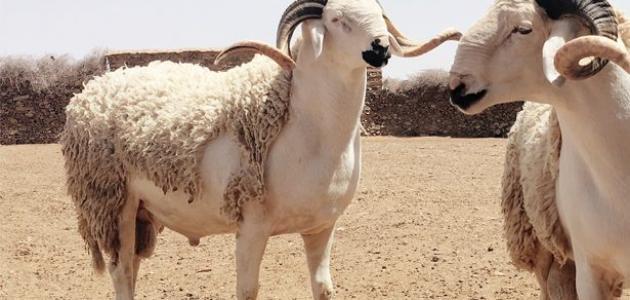 عيد الأضحى في المغرب
