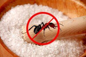 الملح يمنع النمل